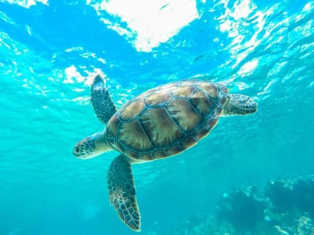 catamaya snorkeling